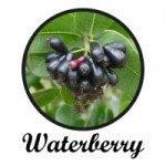 waterberry